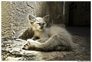 Little cat stunned by the heat and having rest in Meknes, Morocco