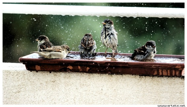 Worst than beaches in summer, this sea resort for bird is always crowded!