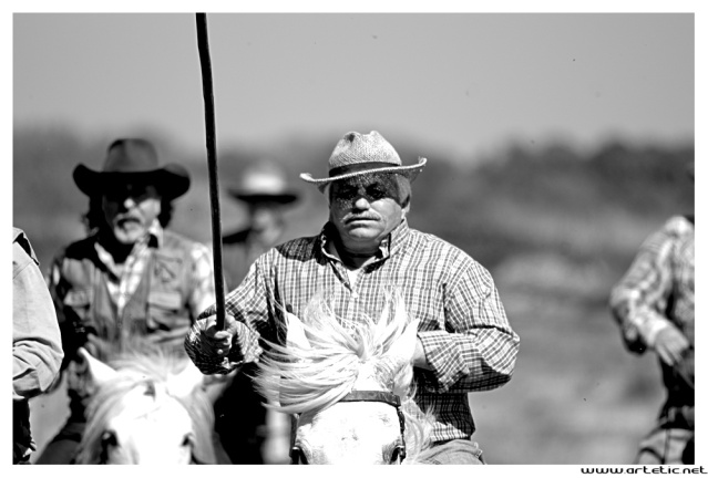 French cow boys working during the summer in Camargue