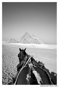 Horse pyramids